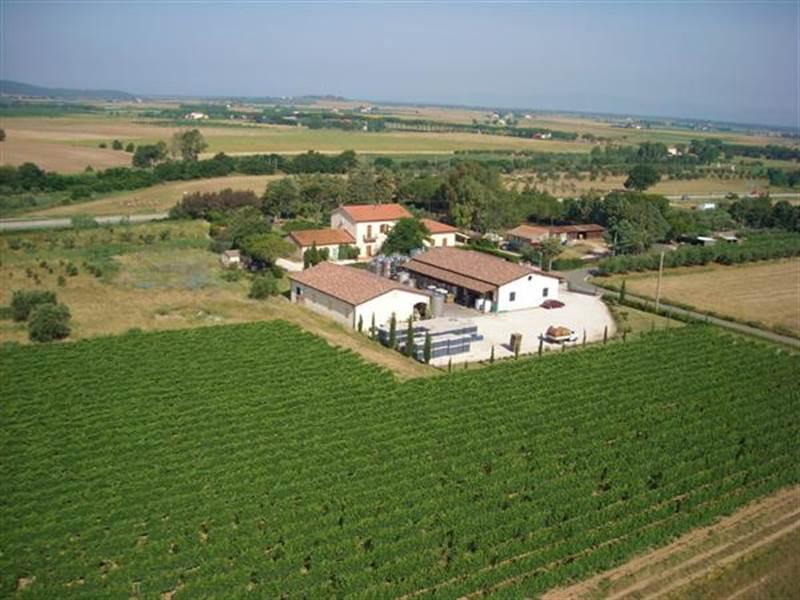 poggio-argentiera-vini-toscani-34417